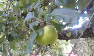 Det tar som bekant några år innan fruktträden bär frukt - men det är väl värt att vänta på!