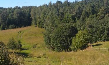 Matproduktion i Sverige ger öppna landskap