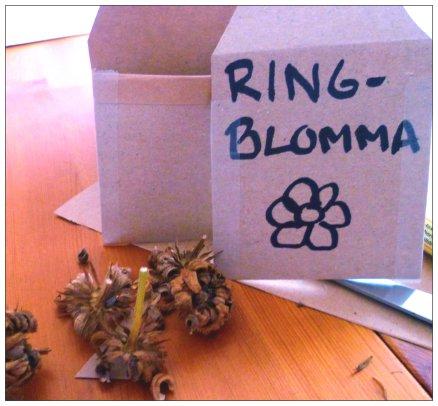 ringblomma2