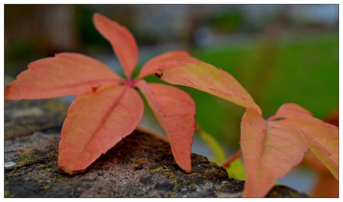 Höstens intåg
