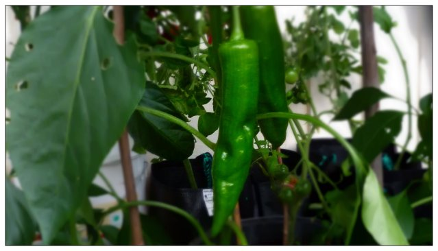 Vad vill du ha i ditt växthus?