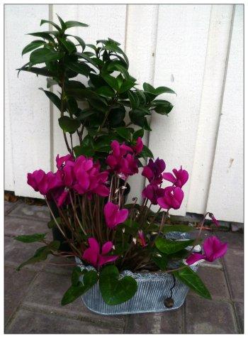 Spara frön och växter till nästa år!