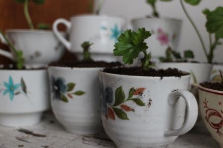 Udda porslinskoppar går att hitta för en liten peng på loppis. När sticklingen vuxit till sig kan den sedan användas till något annat, till att dricka kaffe ur kanske!