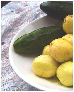 """Jag har sått alla gurkväxterna för de ska jag ha i grönsakslandet . Det blir två sorters gurka en vanlig grön som heter """"Sonja"""" och en som får runda gula frukter och den heter """"Crystal Apple""""."""