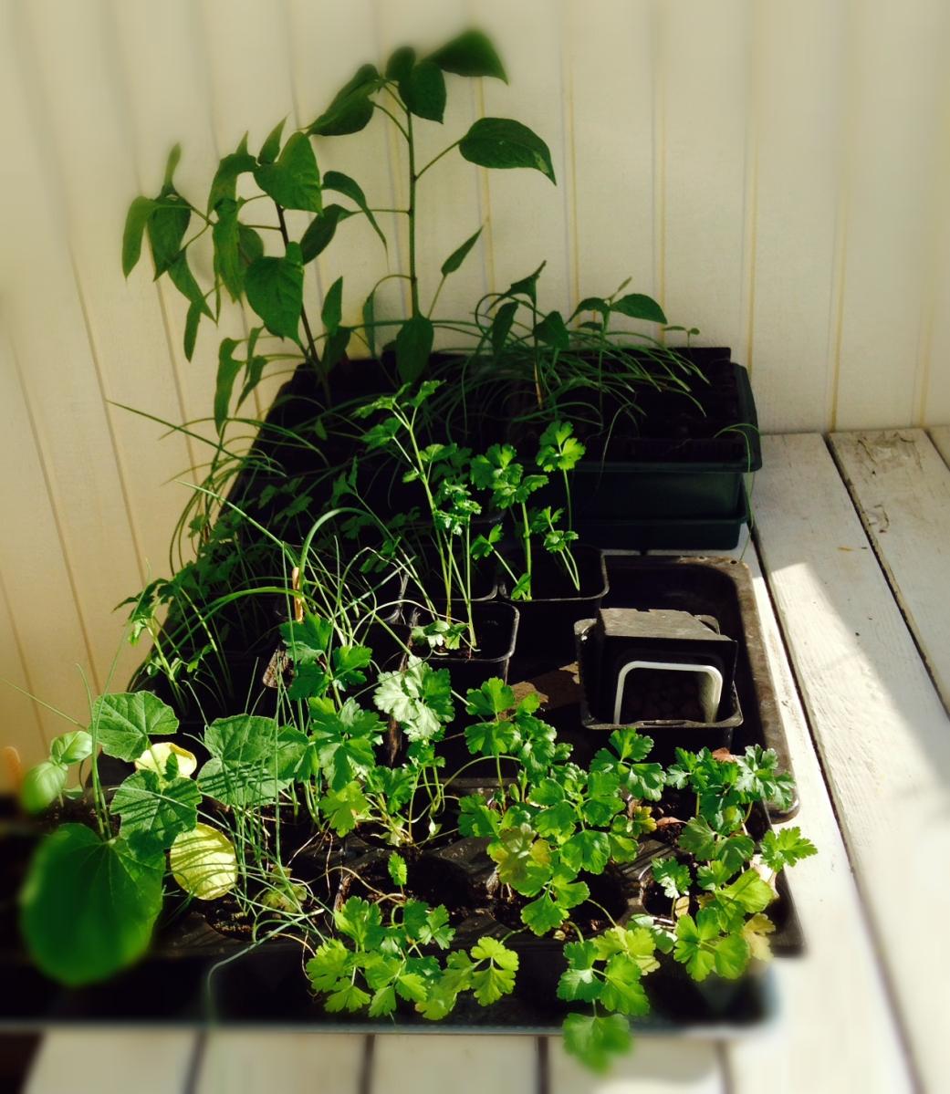 Dags att avhärda dina plantor!