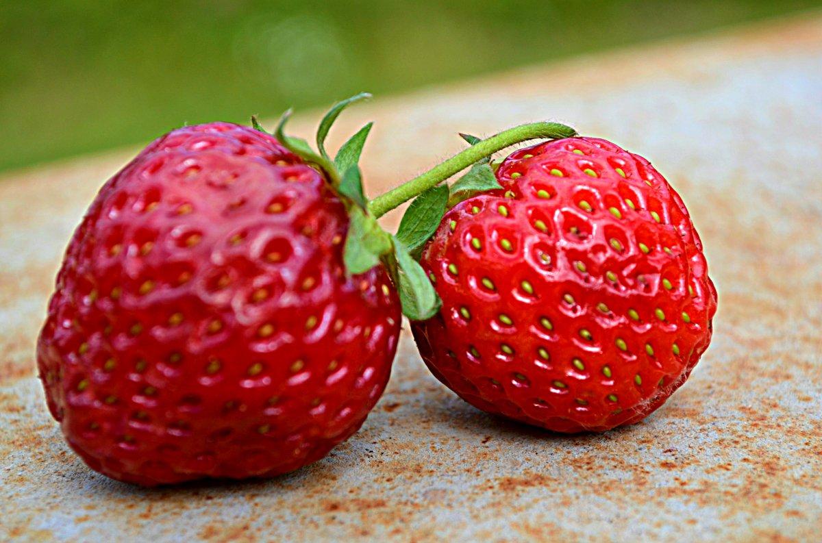 Odla jordgubbar
